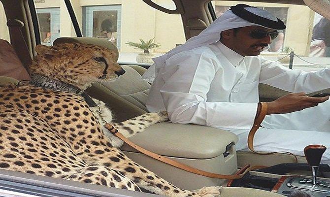 Saudi Arabia King