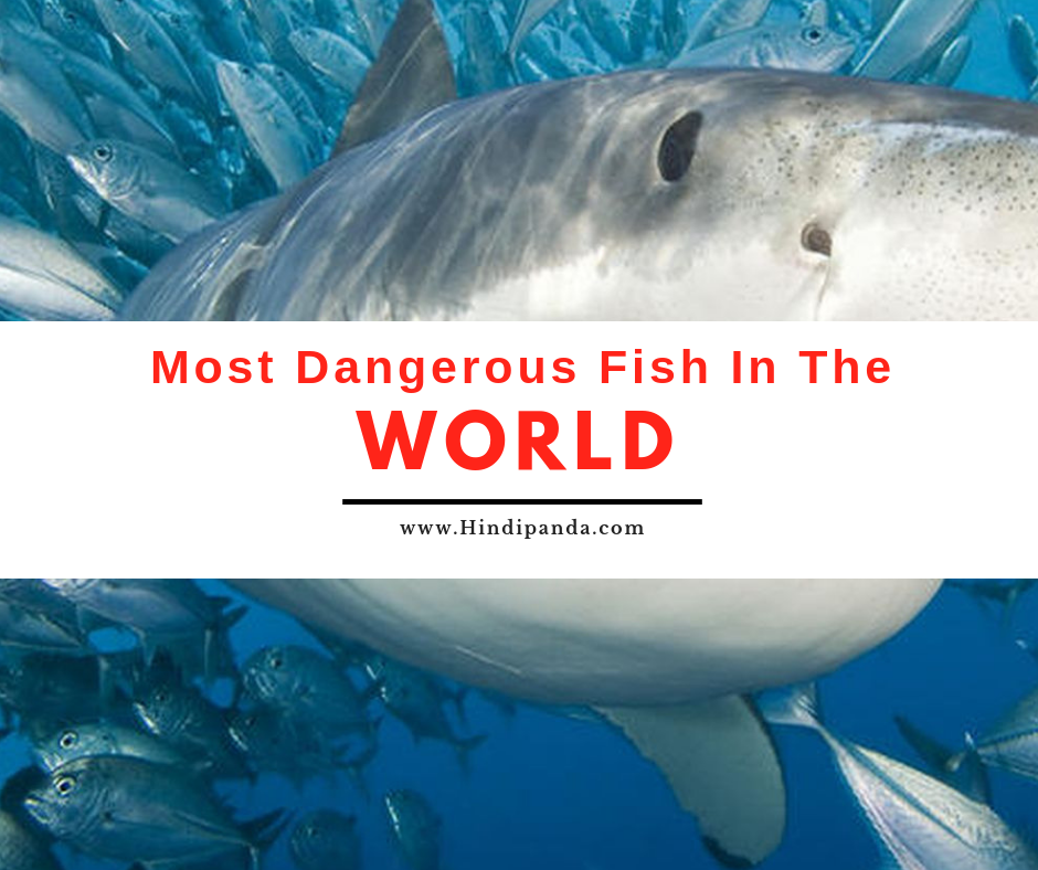 Most Dangerous Fish in the World