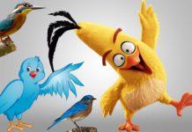 पक्षियों के बारे में जानकारी