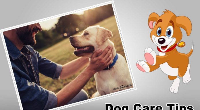 Very Important 10 Dog Care Tips You Must Know