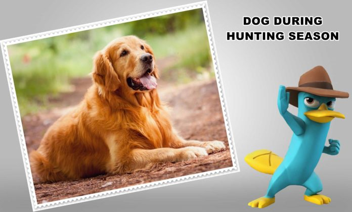 5 SAFETY TIPS FOR YOUR DOG DURING HUNTING SEASON