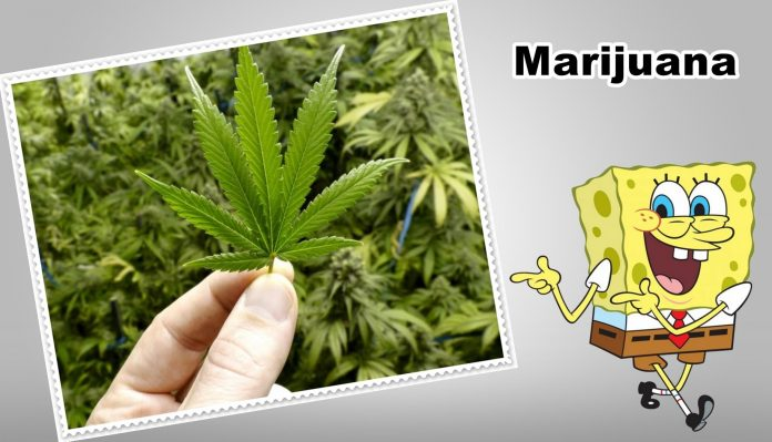 What Are The Medical Benefits of Marijuana ?